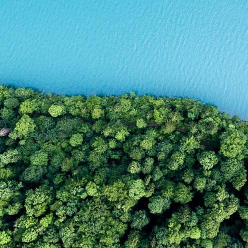 forest along shoreline